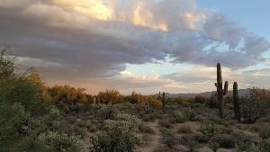 Arizona Luxury Real Estate for Sale
