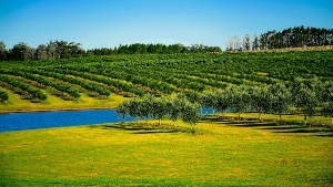 Uruguay Luxury Real Estate for Sale